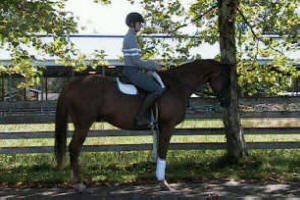 Paradise Ranch Equestrian Center Riding Lessons