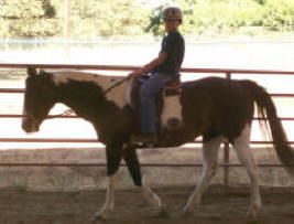 Paradise Ranch Equestrian Center About Us